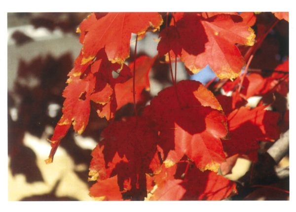 Autumn leaves prayer card front
